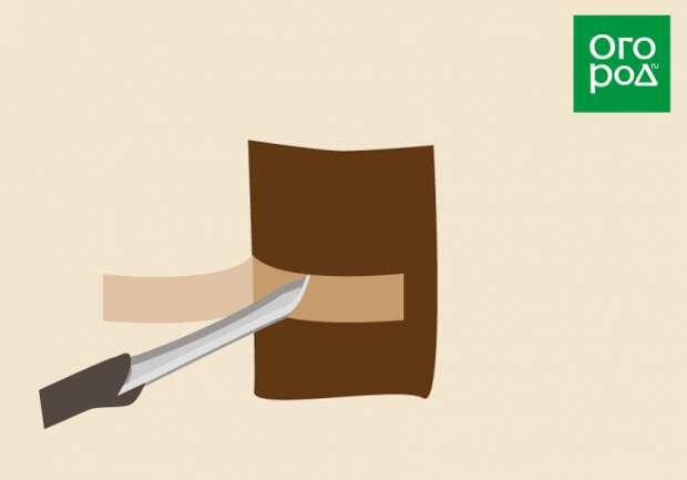 Как правильно снять кору при кольцевании дерева