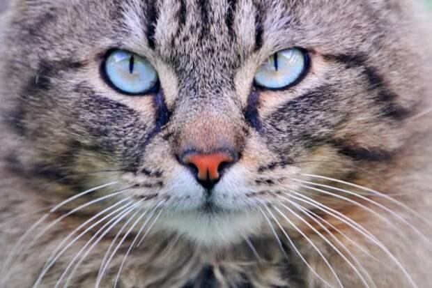 Бессмертный кот