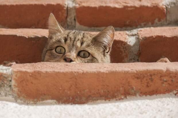 «Меня? Гладить?»: уличный кот никак не мог поверить, что к нему могут относиться ласково