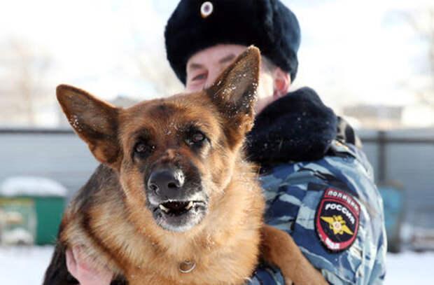 Нашли, согрели, наказали: собака выследила замерзавшего угонщика