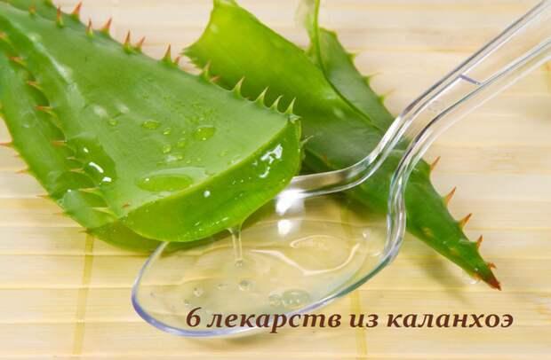 2749438_6_lekarstv_iz_kalanhoe (700x458, 409Kb)