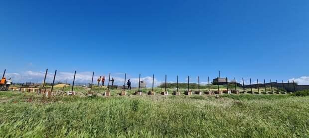 Загадочный забор начал расти на территории Херсонеса