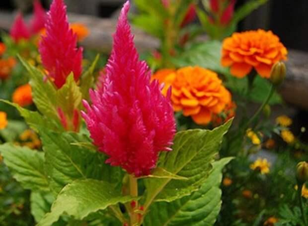 Растения-спутники. Пары растений, подходящих друг другу