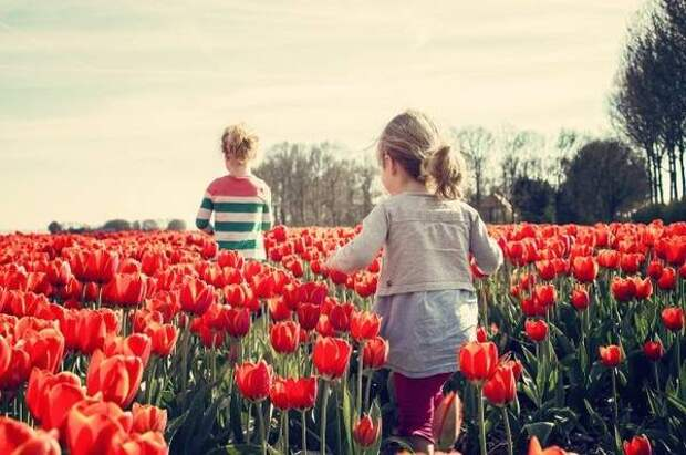 Владивосток – город тюльпанов