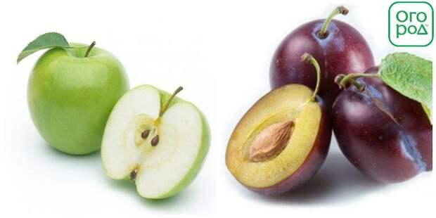 Яблоко и слива