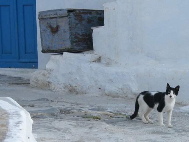 Кошка в Хоре. | Фото: flickr.com.