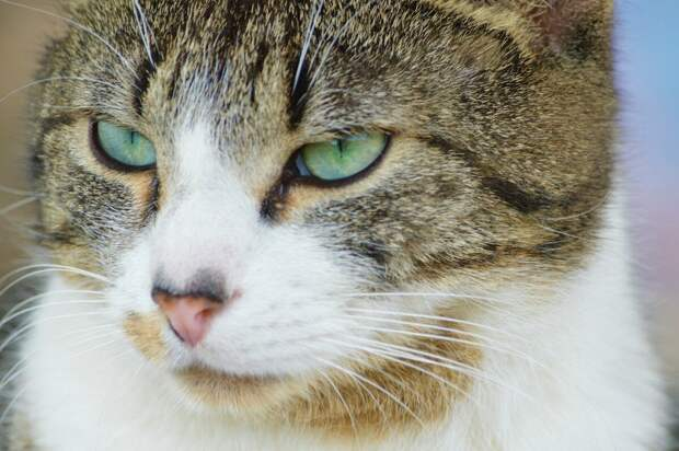 Свекровь хотела вернуть невестке её кошку, но она отказалась