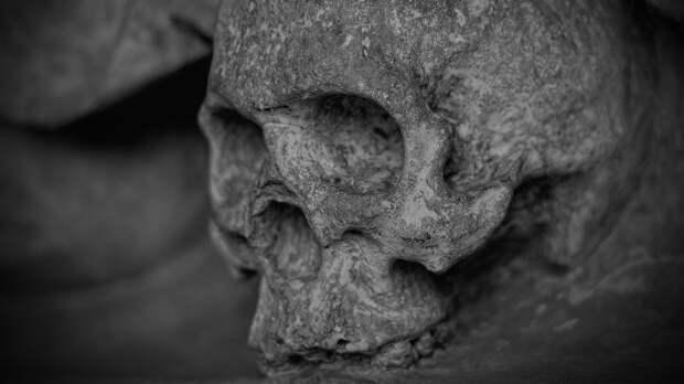 Человеческие останки нашли рядом с логовом волков под Челябинском