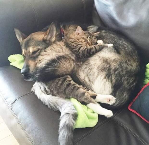 Хозяйка никак не могла решиться взять котика из приюта. Она попросила совета у своей собаки