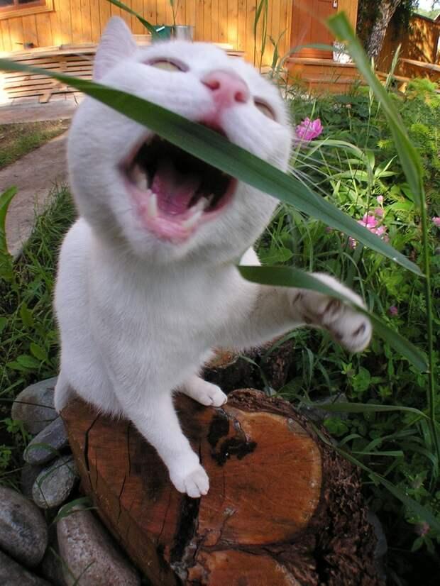 Забавные и симпатичные котики