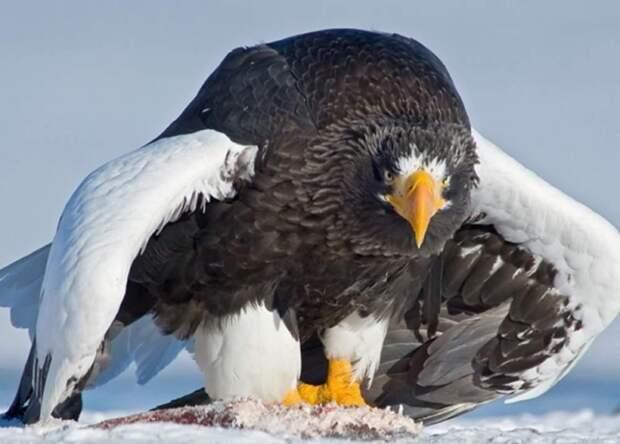 17 животных, природа которых будто хочет сказать: «А вам слабо такое придумать?»