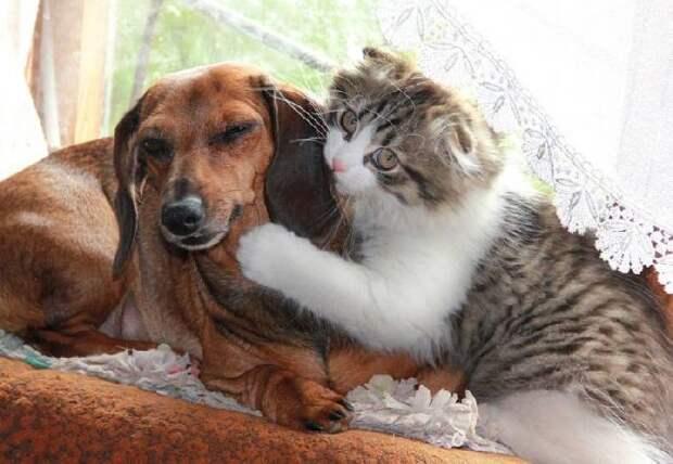 20+ фото собак и кошек, которые сумели подружиться