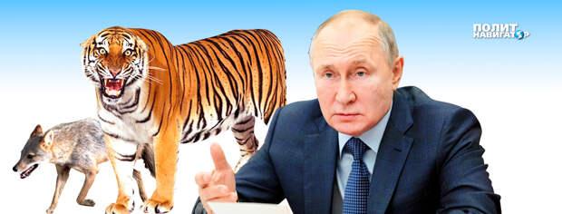 Послание Путина: Байден остался без булочки на завтрак