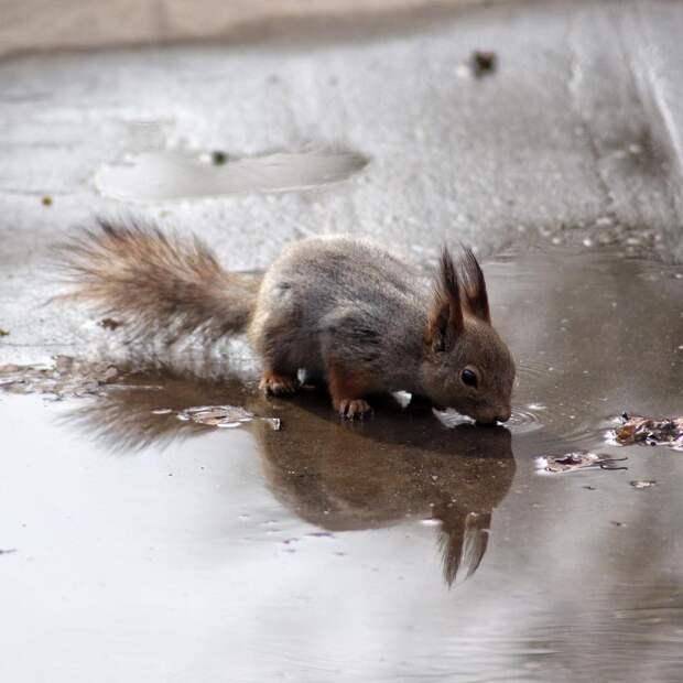 Фото дня: белка утолила жажду в Джамгаровском парке
