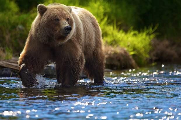 Есть ли в России смертельно опасные животные?