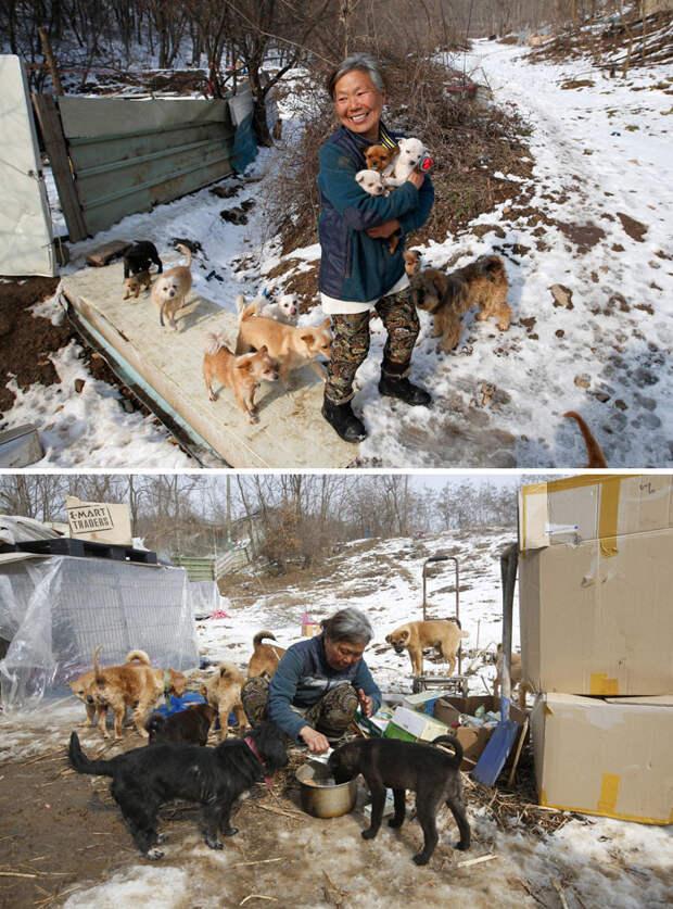Эта кореянка воспитывает 200 собак, которых она спасла от отправки в рестораны Счастливый конец, животные, спасение