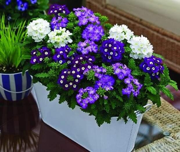 10 роскошных цветов для красоты на вашем балконе