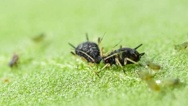 7 насекомых, которых вы едите и даже не знаете об этом (7 фото)