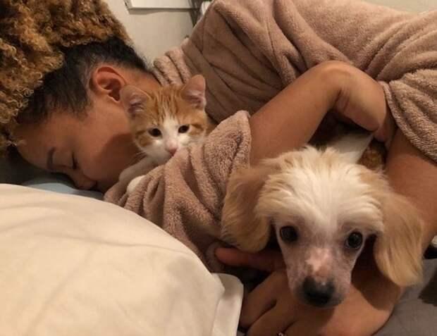«Останется только на одну ночь!» — думала женщина, забирая в дом котенка, но мурлыка придумал, как задержаться