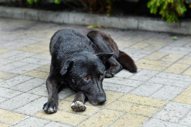 В парке «Певческое поле» пройдет благотворительная акция ко Дню бездомных животных