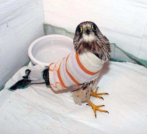 Птичье счастье