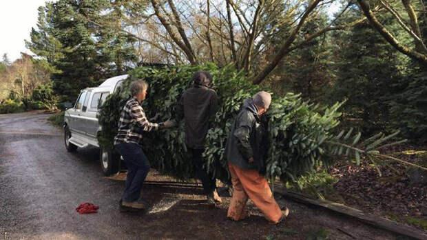 Семья нашла гениальный способ, как установить в обычном доме 6-метровую ёлку