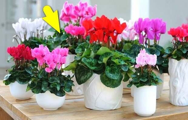 Садоводческая хитрость, с которой комнатные растения зацветут пышнее, чем в магазине