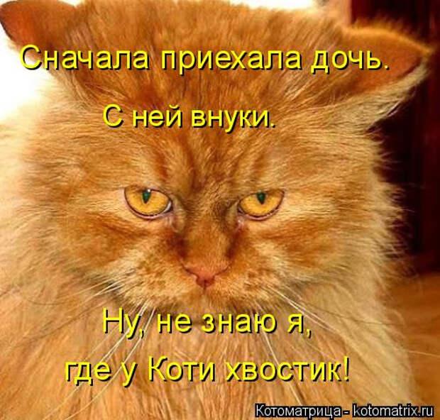 kotomatritsa_Y (1) (502x480, 227Kb)