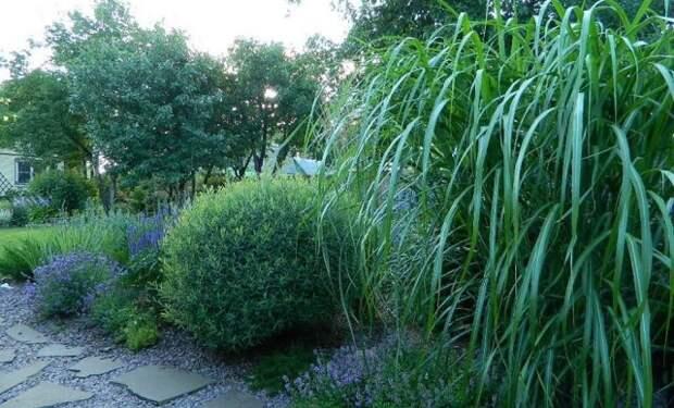 Как превратить дебри на болоте в сад с обложки