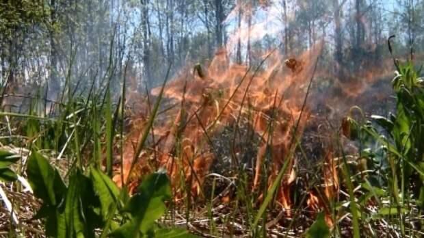 Опасное заблуждение: ФАН выяснил, почему нельзя жечь сухую траву