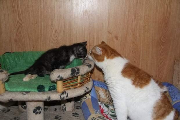Мультика уже приняли в кошачью семью ФОТО:соцсети