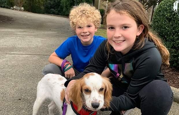 Собака и дети