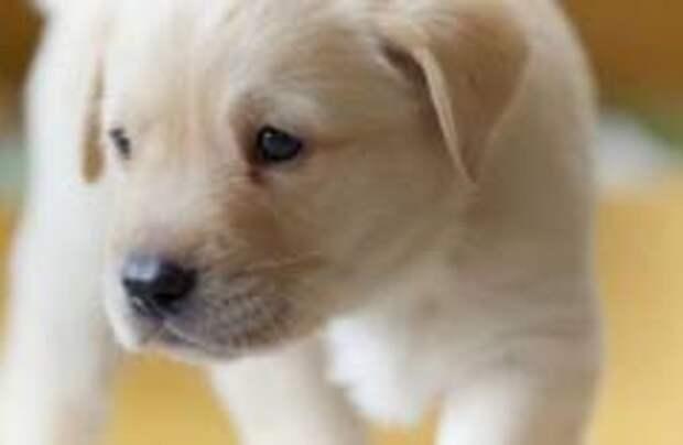 В Италии права животных могут приравнять к правам детей