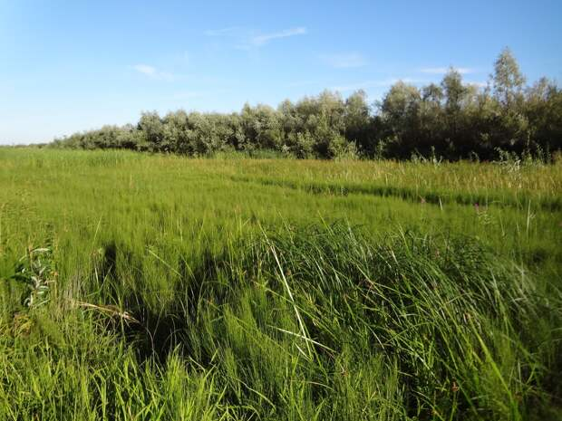 Фото автора: В траве кто-то зашевелился