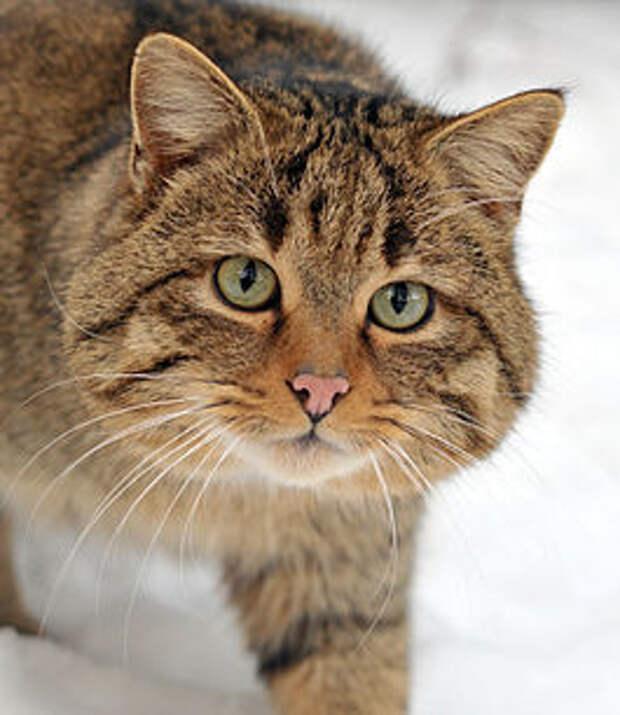Кошки- лучшие целители. Изображение № 2.