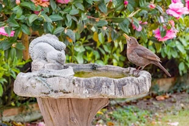 поилка для птиц