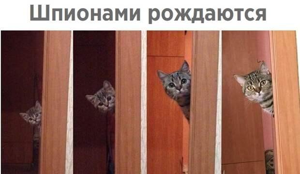 Забавные и интересные фотографии с надписями из сети