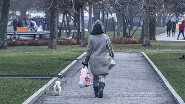 В Москве 25 октября ожидаются облачная погода и порывистый ветер