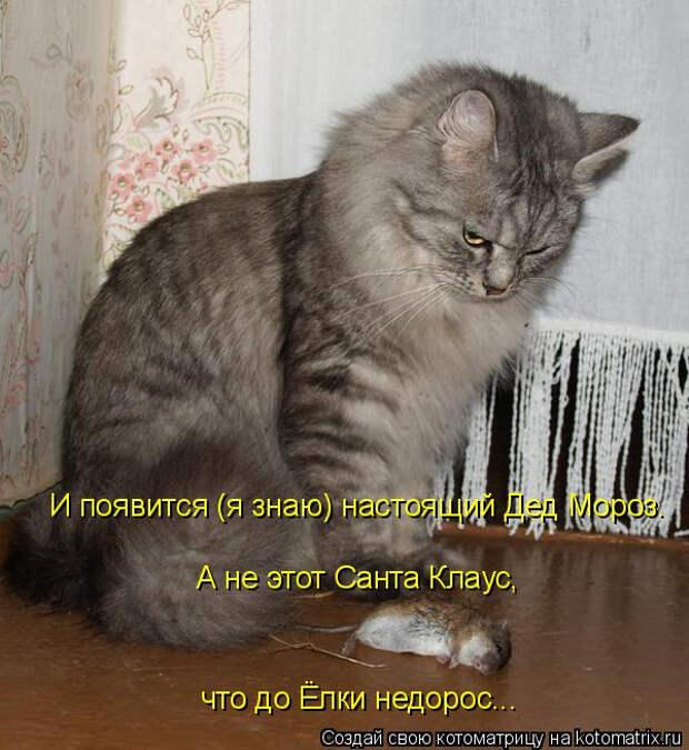 kotomatritsa_g (600x654, 237Kb)
