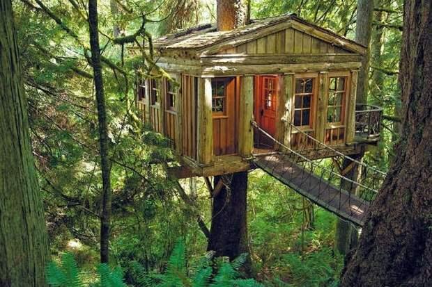 Свадьба в домике на дереве.