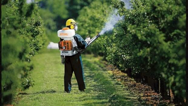 Все методы борьбы с садовыми клещами!