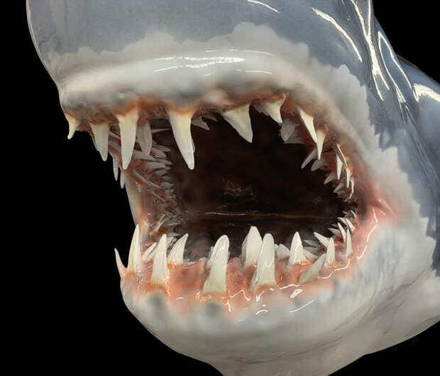 Акула Мако. Кошмар океана.