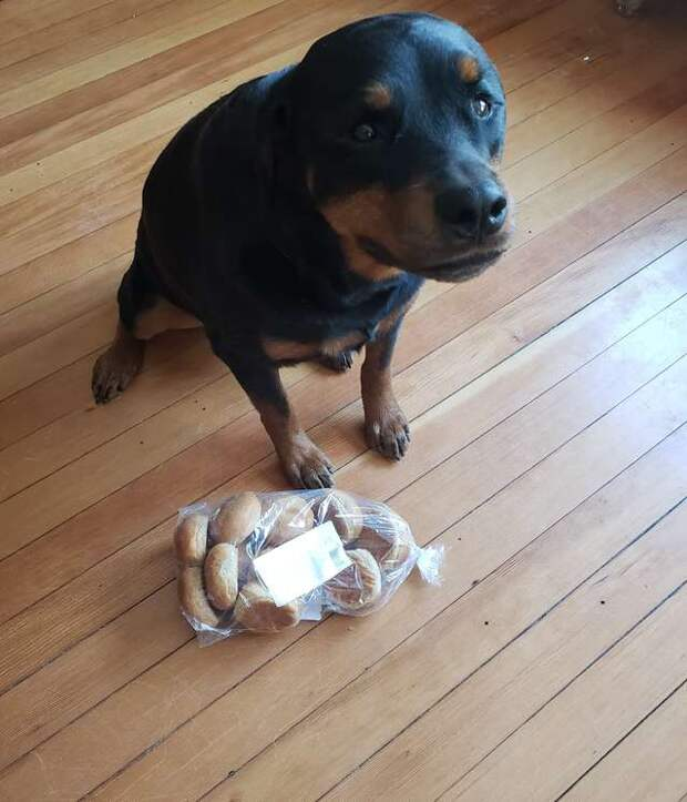 собака и хлеб
