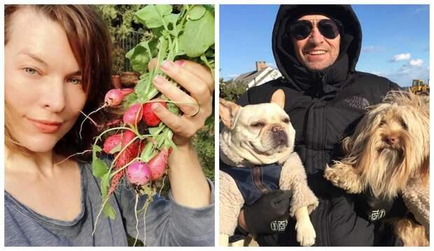 Милла Йовович с редисом и Хью Джекман с собаками: 20 нетипичных снимков звезд