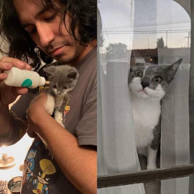 Истории о взрослении и переменах в жизни котов
