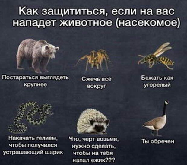 Как защититься от животных