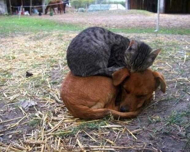 Котяки — вездеспаки: миссия «Уснуть в позе фигвама»!