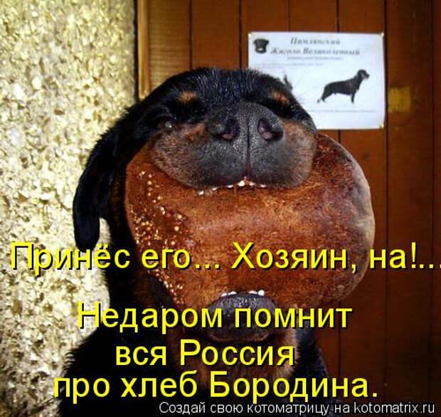 kotomatritsa_W (1) (500x473, 254Kb)