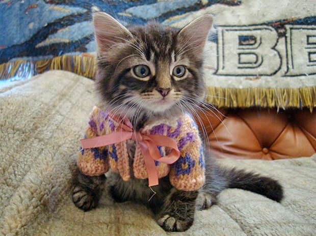 Тёплый свитер с орнаментом для милого пушистика.
