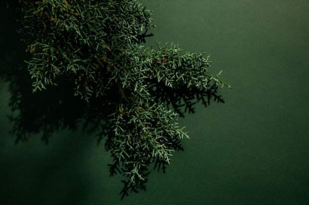 Парфюмы с нотами кедра: звезды древесных ароматов